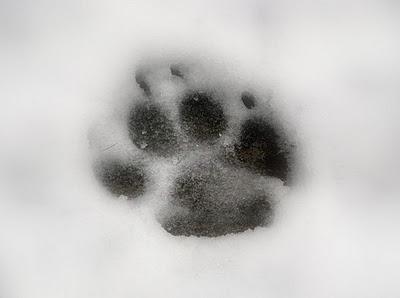 Уникальные лапы собак