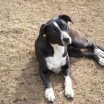 Как определить породу собаки?