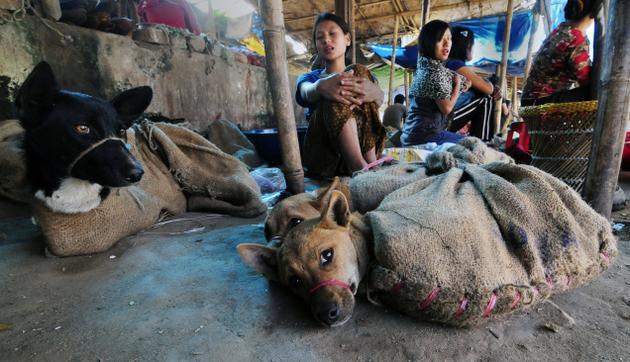 Собаки на рынке в Нагаленд (Индия)