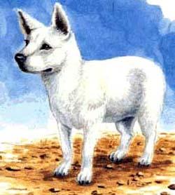 """Гавайская собака пои (иллюстрация из книги Э. де Приско, Дж. Джонсон """"Малый атлас пород собак"""")"""