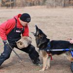 Собаки + инвалиды = спорт