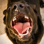 От чего зависит агрессивность собак?
