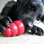 Ваша собака правша или левша?