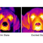 Могут ли люди сделать собак счастливыми?
