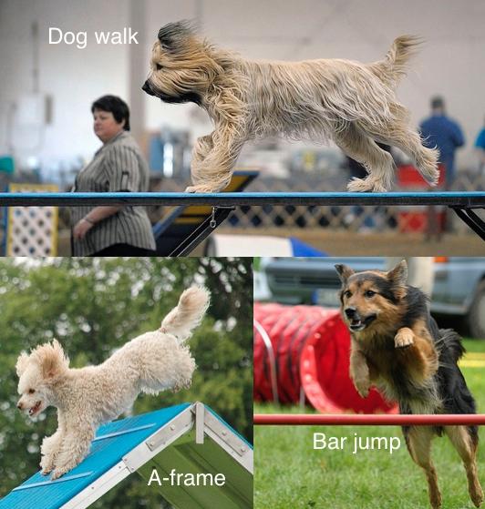 аджилити собаки