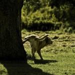 Еще о собачьих метках