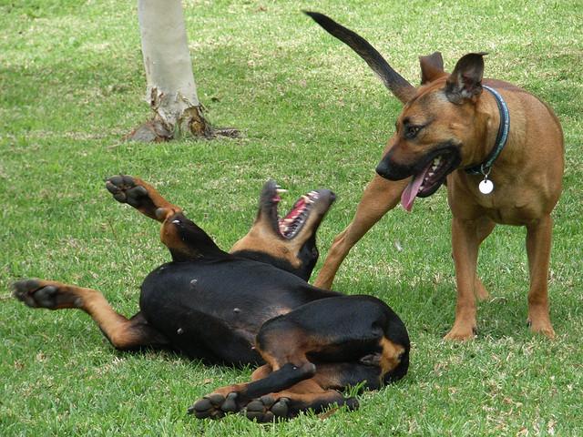собака опрокидывается на спину