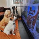 Почему собаки любят смотреть телевизор?