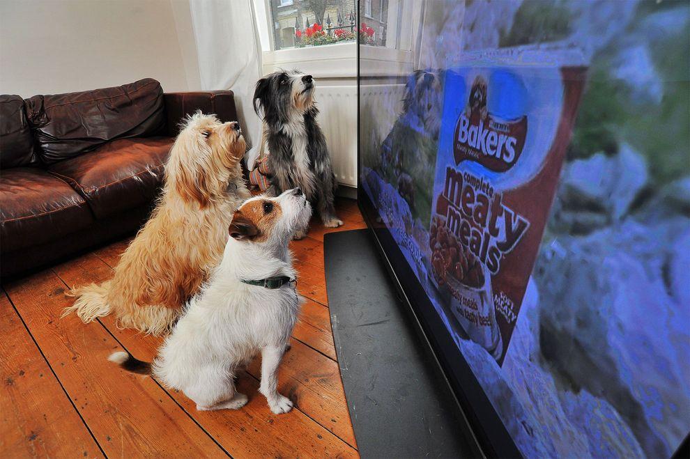 Собаки смотрят рекламу Bakers - корма для собак. Эта реклама создана специально для собак в Великобритании в 2012, чтобы привлечь животных они используют высокочастотные звуки, которые могут услышать только животные.