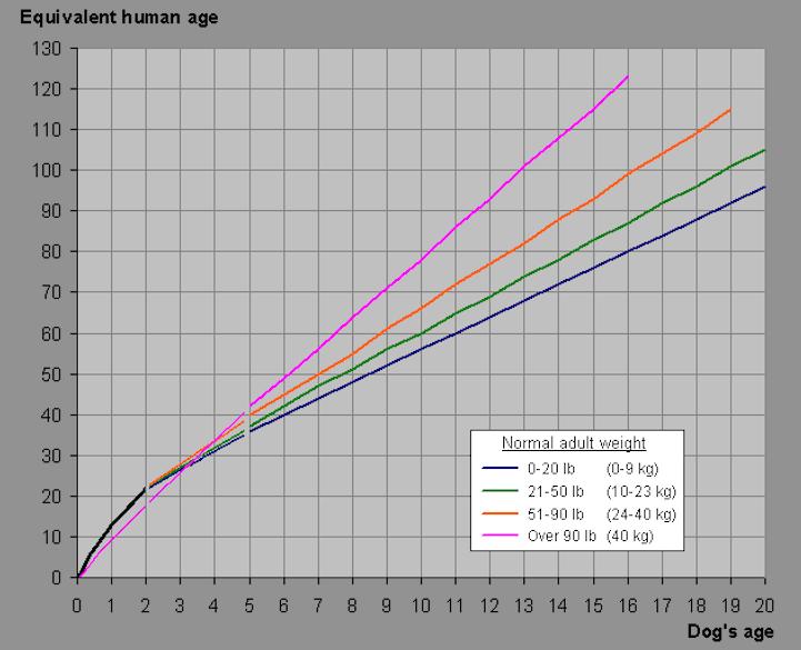 возраст собак и человека