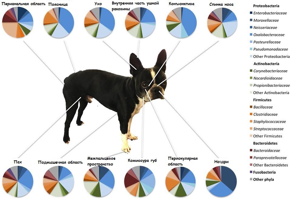микрофлора кожи собак