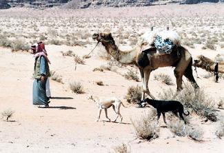 Салюки и ее владельцы в Иордании.
