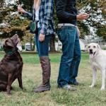 Существует ли женский и мужской подход к дрессировке собак?