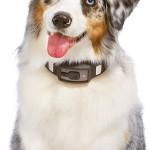 Умный ошейник, фотоаппарат и 3d-принтер на службе у ветеринаров