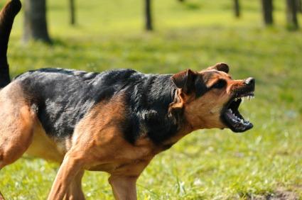 агрессия собак