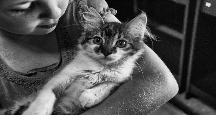 кошка и ребенок с аутизмом