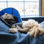 Чем занять собаку после операции, если необходимо ограничить ее подвижность