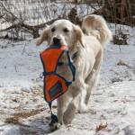 Гостевой пост: Как работают собаки-спасатели в лесу?