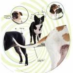 Как внешний вид влияет на поведение собак?