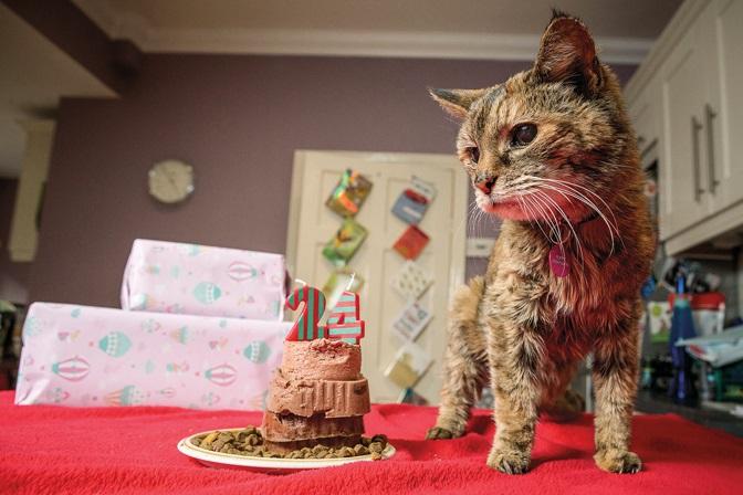 Поппи кот-долгожитель