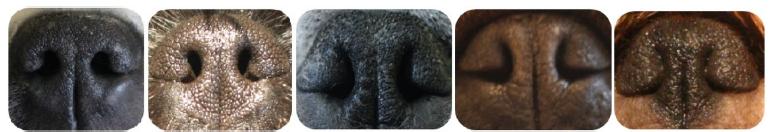 ноздри собак