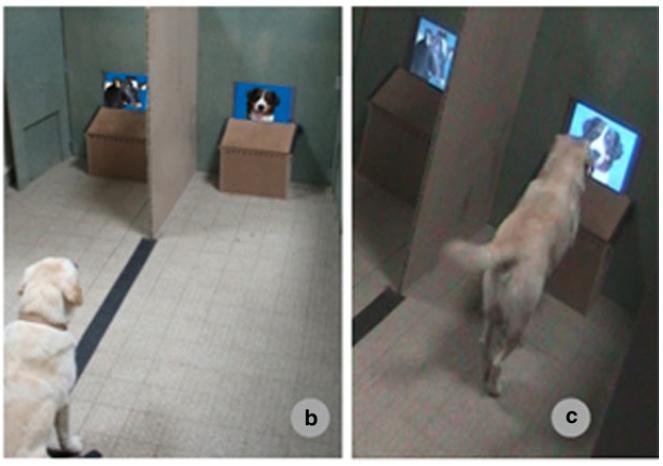 эксперимент с собаками