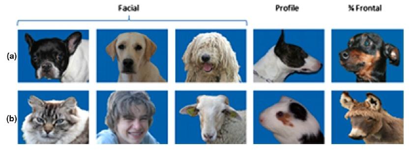 фото для распознавания собакам
