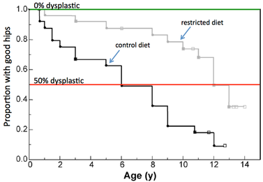 вес и дисплазия