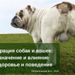 """Презентация """"Кастрация собак и кошек: ее значение и влияние на здоровье и поведение"""""""