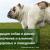 Презентация «Кастрация собак и кошек: ее значение и влияние на здоровье и поведение»