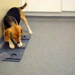 Как жизненный опыт и вид дрессировки влияют на то, будет ли собака обращаться к вам за помощью в новой ситуации