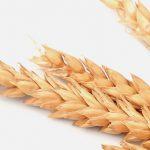 Беззерновые корма: факты и домыслы