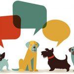 О чем лают собаки?