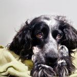5 причин, почему вы не должны ругать свою собаку