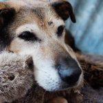 О необходимости обогащения среды для пожилых собак и кошек