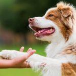 Что такое положительное подкрепление в дрессировке собак?