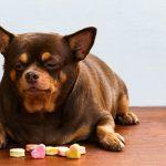 Почему так много кошек и собак с ожирением?