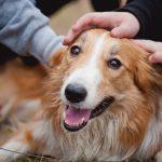 Ваша собака добрая?