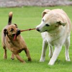 Могут ли собаки делать и использовать инструменты?