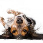 Собаки видят мир иначе, чем люди
