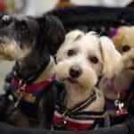 Возможности и ограничения генетического тестирования у собак