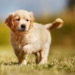 Качество жизни собак
