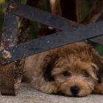 Собаки не должны бояться фейерверков
