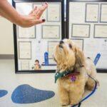 Как оценить ум собаки?