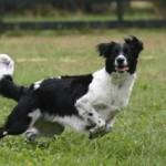 Хорошие и плохие игры с собаками