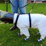Собака-помощник пчеловодов