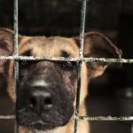 Гостевой пост. Софья Баскина: Приюты для собак должны исчезнуть... за ненадобностью