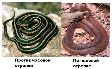змеи часы