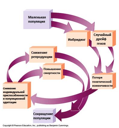 http://dogdiary.ru/wp-content/uploads/2014/10/vihr2.jpg
