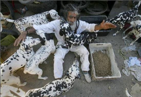 Нельсон Вергара, впечатленный фильмом «101 длматинец» собирал брошенных далматинов в Чили, одновременно коллекционируя и спасая собак